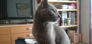 うちのネコのイメージ